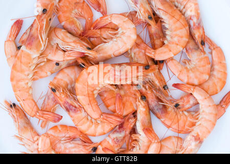 Crevettes on a white background. - Stock Photo