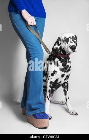 Dog breed dalmatian sits next to her mistress's feet in blue jeans girl bottoms and platform shoes on a leash - Stock Photo