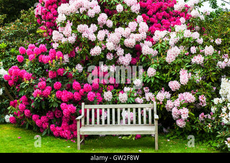 Garden with rhododendrons and old wooden bench. - Stock Photo