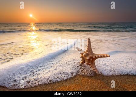 sea star starfish on beach, blue sea and sunrise time. - Stock Photo