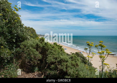 Looking east from Branksome Chine, Poole, with Bournemouth Pier in the background. Amongst the gorse on the cliffs - Stock Photo
