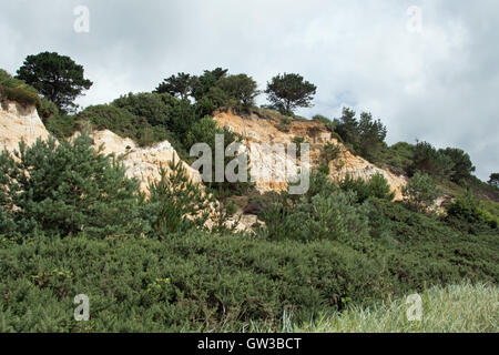 Canford Cliffs, Branksome Chine, overlooking Poole Bay, Dorset, UK - Stock Photo