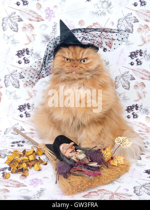 Persian cat wearing witch's hat - Stock Photo