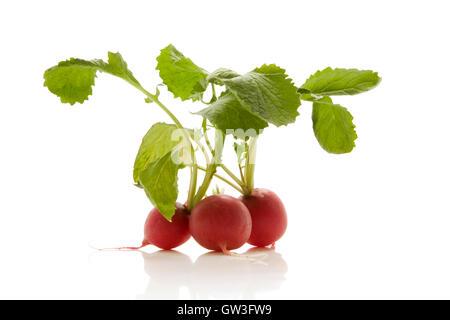 fresh radish isolated over white background - Stock Photo