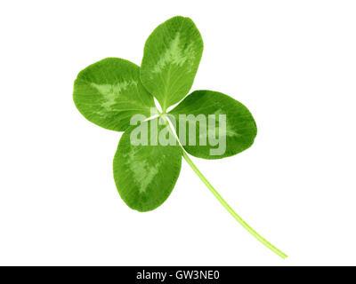 Lucky clover St Patrick Day irish holiday symbol isolated on white - Stock Photo