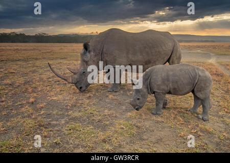 Rhino and Baby - Stock Photo
