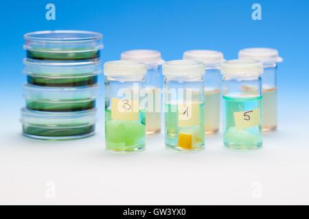 samples in plastic vials for microscopy and biopsy tissue. biolo - Stock Photo