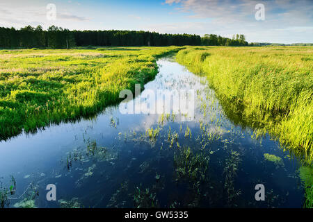 Summer landscape with Jegrznia river and marsh vegetation in the vicinity of Biebrza National Park. Podlaskie region, - Stock Photo