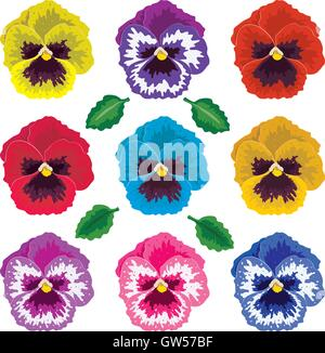 vector collection of pansy flowers and leaves - Stock Photo