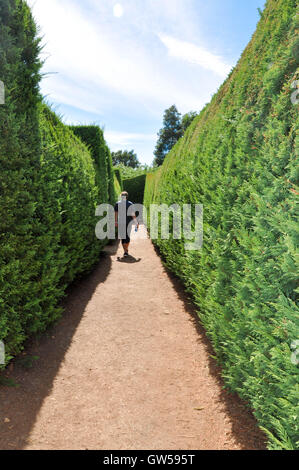 Margaret River,WA,Australia-January 16,2016: Person walking through the hedge maze at Amaze'n Margaret River in - Stock Photo