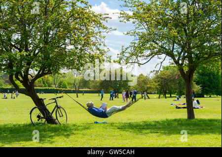 LONDON - JUNE 12, 2016: A man strings a hammock in the shade of two trees in Primrose Hill park a popular recreation - Stock Photo
