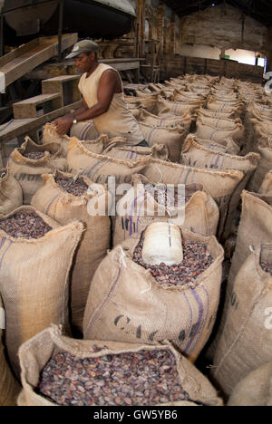 Cocoa beans packed in sacks after roasting, ready to be shipped. São Tomé e Príncipe - Stock Photo