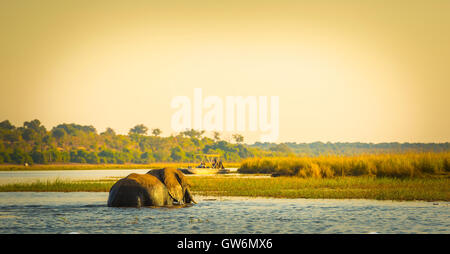 Tourists watching an elephant while on safari in Botswana, Africa - Stock Photo