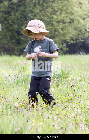 Caucasian child, boy, 6-8 years old, walking through grass field holding dandelions. Side view, looking down and - Stock Photo