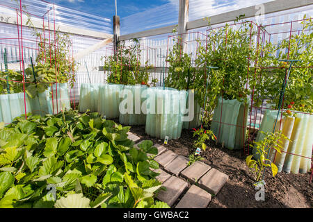 Residential vegetable garden with strawberries, tomatoes, peppers & zuchinni - Stock Photo