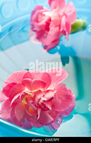 pink Carnation flowers in water, meditation and mindfulness - Stock Photo