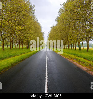Straight empty wet road between green trees. Loire valley. France. - Stock Photo