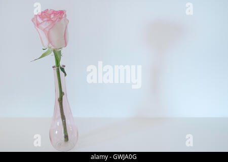 Single Pink Rose Stem in a Pink Bud Vase placed on a plain table top against a plain white wall. - Stock Photo