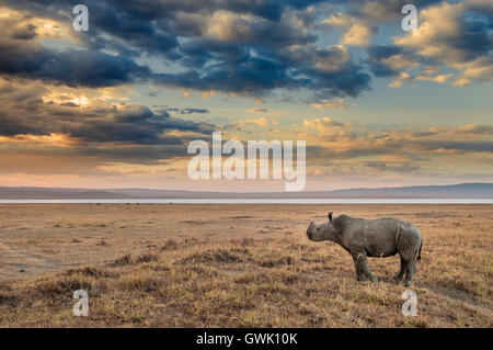 Baby Rhinoceros on the shores of Lake Nakuru, Kenya. Africa. - Stock Photo