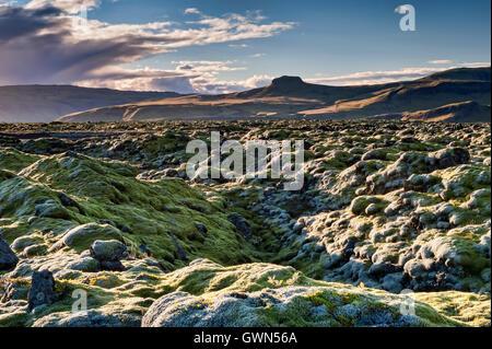 Extensive Moss Covered Volcanic Lava Fields, near Vik i Myrdal, Southern Iceland - Stock Photo