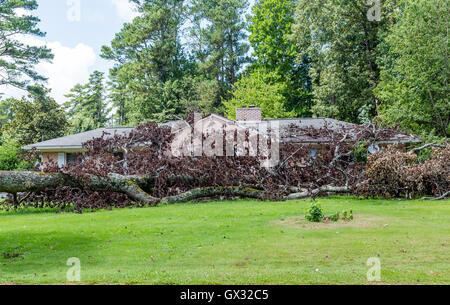 Huge tree fallen on a home causing storm damage - Stock Photo