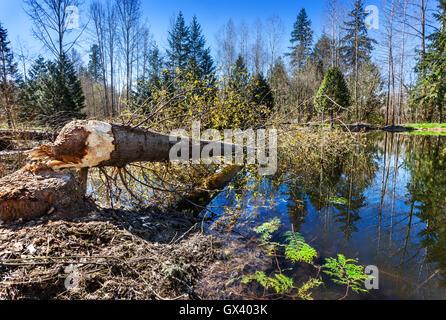 Tree felled across pond - Stock Photo