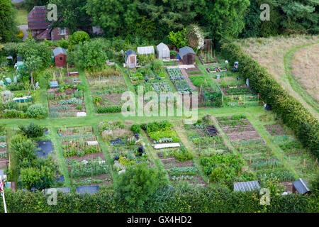 Allotment gardens in Kirkby Lonsdale Cumbria England - Stock Photo