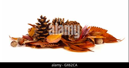 Pile of autumn leaves, pine cones and nuts over a white background - Stock Photo