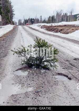 Breaking up of the frost on gravel road, Sweden - Stock Photo