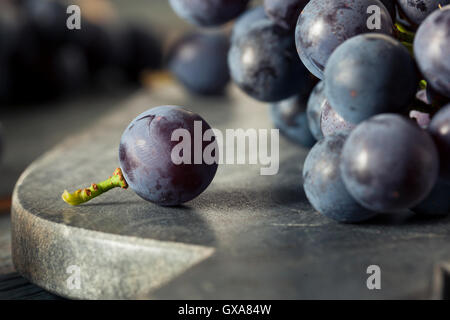 Raw Organic Purple Concord Grapes Ready for Cooking - Stock Photo