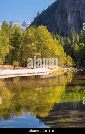 Autumn trees flank the River Merced in Yosemite Valley, California, USA. Autumn (October) 2014. - Stock Photo