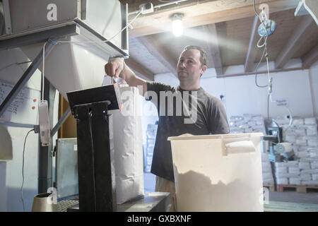Male miller filling sacks with milled flour in wheat mill - Stock Photo