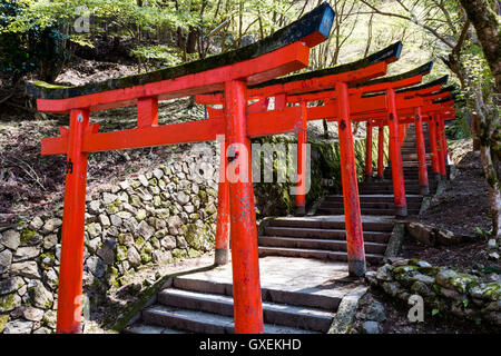 Japan, Izushi castle. Row of vermilion Torii gates along stone steps leading up between the castle Ishigaki stone walls to the (unseen) inari shrine.