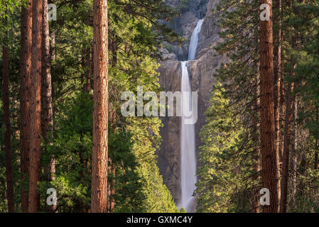 Lower Yosemite Falls through the conifer trees of Yosemite Valley, California, USA. Spring (June) 2015. - Stock Photo