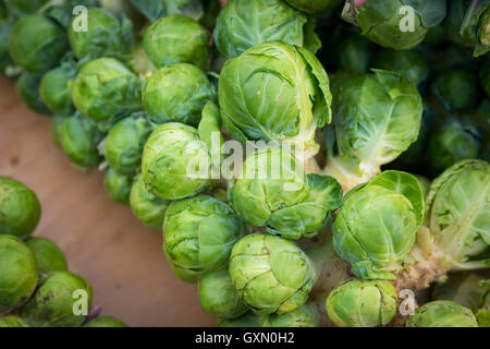 Brussel sprouts for sale at the City Market (104 Street Market) in Edmonton, Alberta, Canada. - Stock Photo