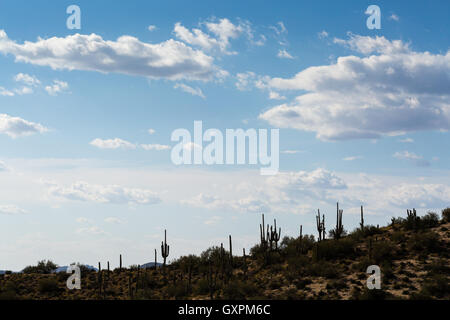 Silhouetted saguaro cactus standing against a partly cloudy sky. Tonto National Forest, Arizona - Stock Photo
