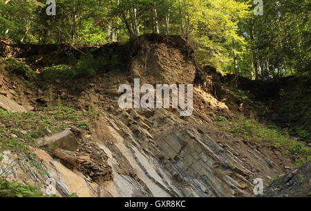 big rock and forest - Stock Photo