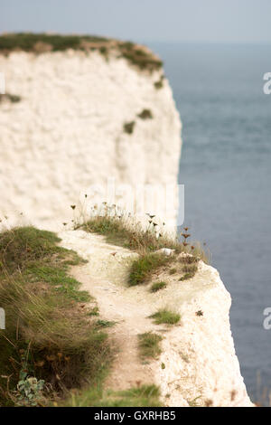 Chalky white cliffs at Old Harry Rocks on the coast of Purbeck, East Dorset , UK, known as the Jurassic Coast. - Stock Photo