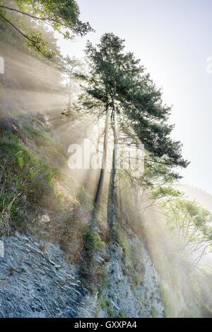 The sun shines through trees on The Lost Coast of California. - Stock Photo