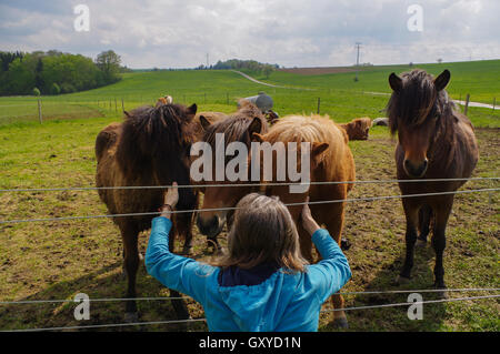 man feeding horses on a meadow at summer time - Stock Photo