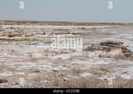 Etosha National Park, Namibia, August 2016 - Stock Photo