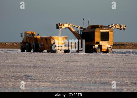 Collecting salt by machine, Saltpans, Walvis Bay, Namibia,  August 2016 - Stock Photo