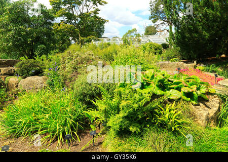 Plants in rockery area Kew Gardens, Royal Botanic Gardens, London, England, UK - Stock Photo