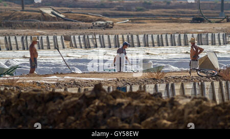 Portuguese workers shoveling salt into wheelbarrows on the Tavira saltpans (Portugal's famous fine salt), Ria Formosa, - Stock Photo