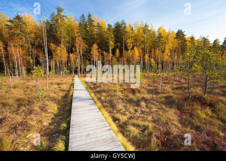 Wooden Path Way Pathway From Marsh Swamp To Forest. Autumn Nature Forest Landscape. Wooden Board Boarding On Ground - Stock Photo
