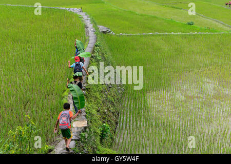PHILIPPINES, Ifugao Province, Cordilleras, Banaue, Hunduan, rice farming on Hapao rice terraces in mountains, children - Stock Photo