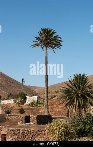 Fuerteventura: palms and mountains in Betancuria, the first town founded by Spanish colonizers in 1405 - Stock Photo