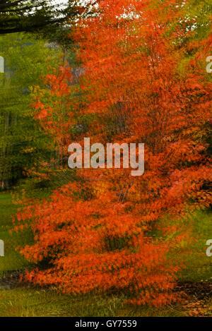 Autumn tree abstract - Stock Photo