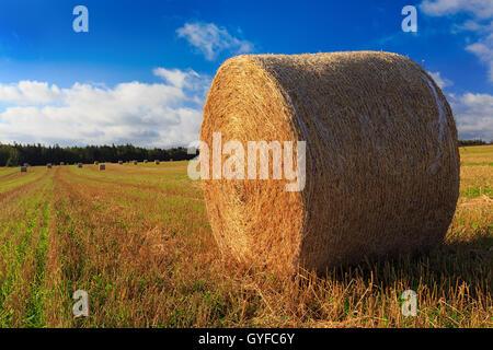 Hay bales in a farm field in rural Prince Edward Island, Canada. - Stock Photo