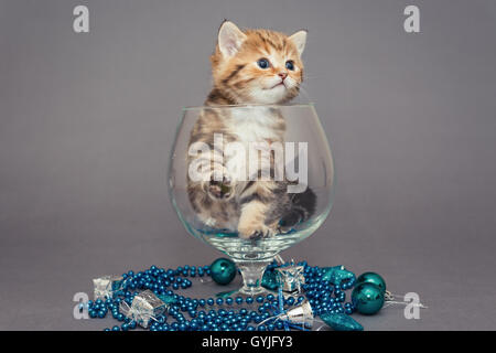 British kitten, large glass and Christmas toys - Stock Photo